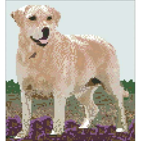 Borduurpakket Golden Retriever 25x23cm