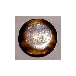 Schelpkraal 25mm rond goudbruin p.st